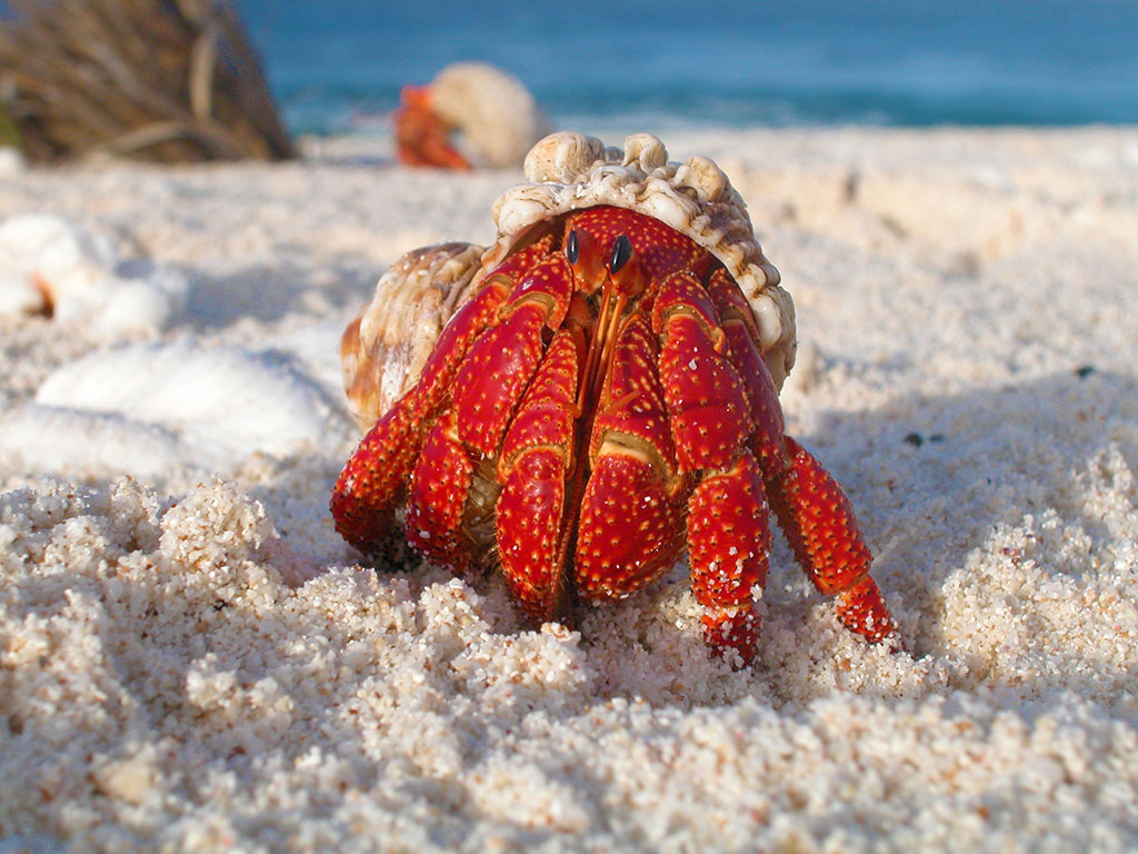 photo of a crab on a beach