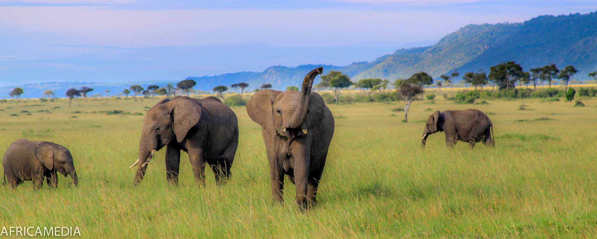 photo of elephants on a green savannah